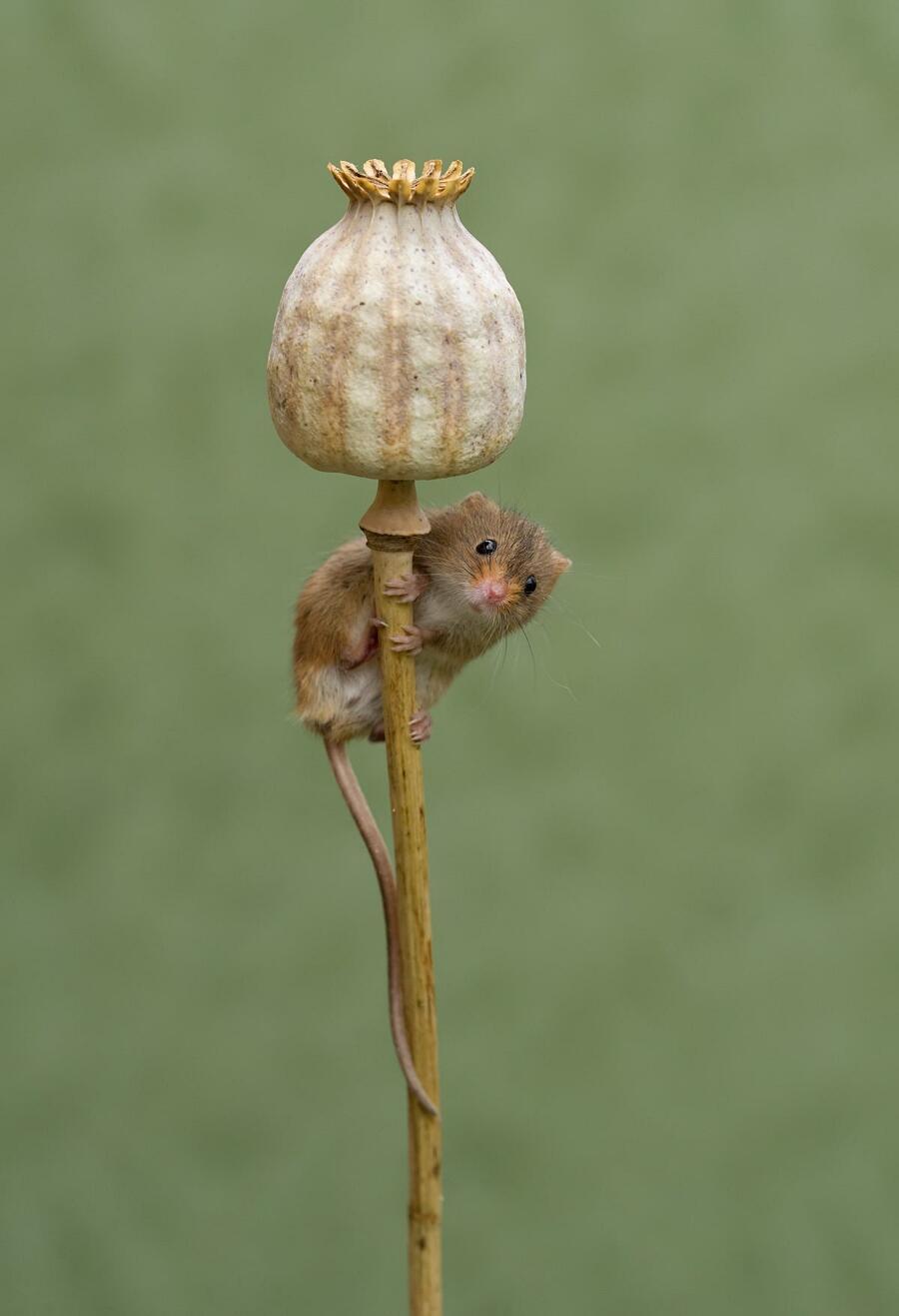 Foto adorabili topolini Dean Mason