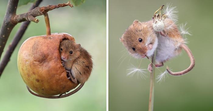 Le foto di adorabili topolini che giocano tra le piante