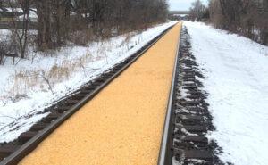 Il mais fuoriesce dal treno e trasforma i binari nella Strada di Mattoni Gialli del Mago di Oz