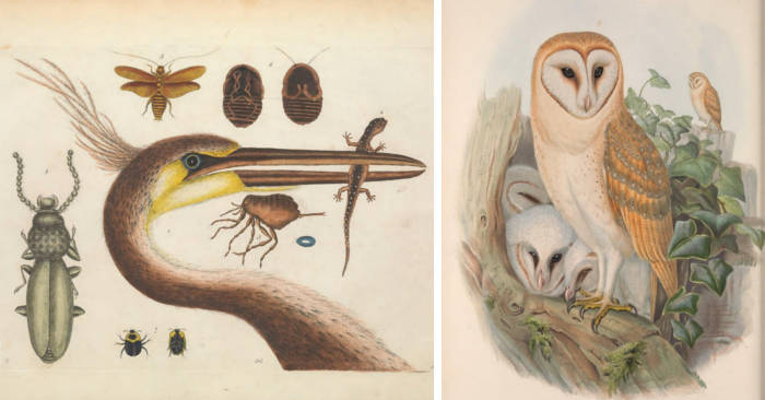 Scarica gratis 150.000 illustrazioni scientifiche di flora e fauna dalla Biodiversity Heritage Library