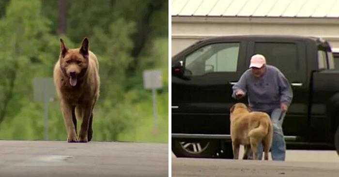 Bruno, il cane che percorreva 7 km ogni giorno solo per salutare tutti gli abitanti della città