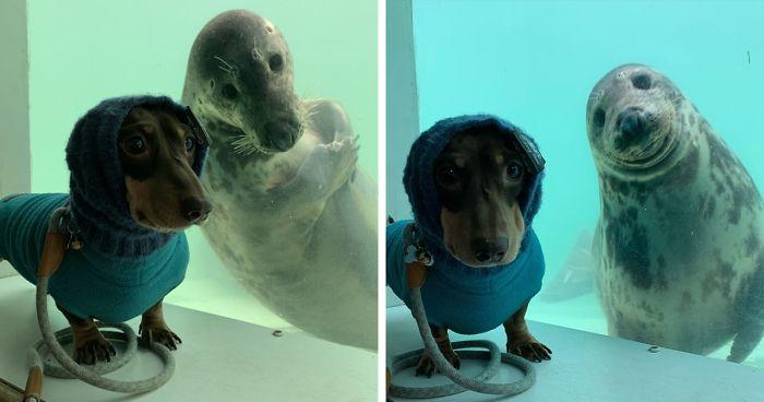 Un bassotto e un cucciolo di foca si conoscono e diventano subito amici per la pelle