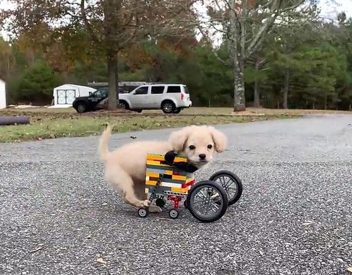 Cane senza zampe anteriori sedia a rotelle Lego