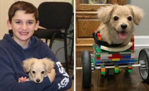 """12enne costruisce una """"sedia a rotelle"""" con i LEGO per un cucciolo nato senza zampe anteriori"""