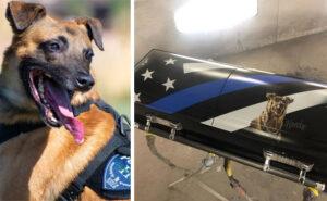 Cane poliziotto ucciso in servizio verrà sepolto in una bara con il suo ritratto