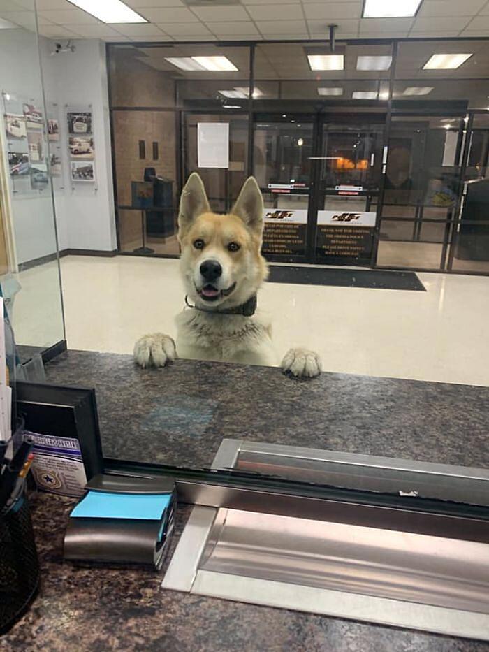 Cane si perde e va alla stazione di polizia Texas