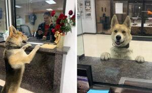 """Cane entra nella stazione di polizia texana per """"denunciare"""" il suo smarrimento"""