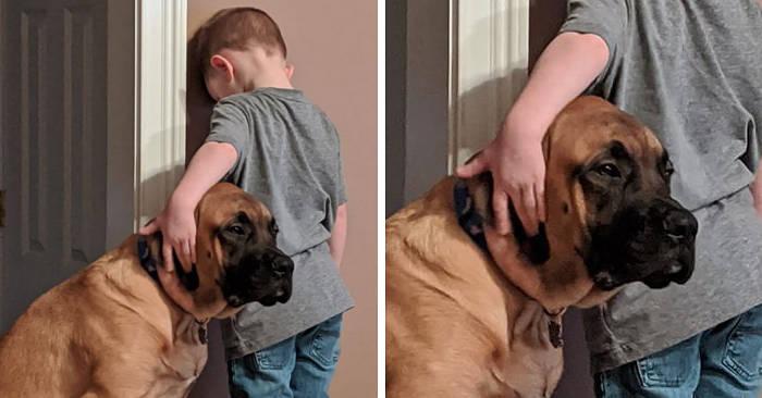 Il cane tiene compagnia al bambino in castigo e si dimostra davvero il miglior amico
