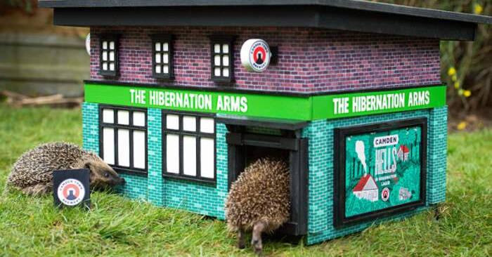 Birrificio a Londra crea dei pub in minatura per i ricci in letargo