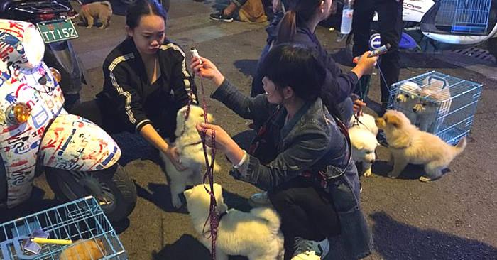 Autorità cinesi minacciano di sopprimere cani e gatti a causa del coronavirus