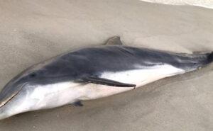 Delfini uccisi a colpi di proiettile e pugnalate in Florida, $ 20.000 a chi trova gli assassini