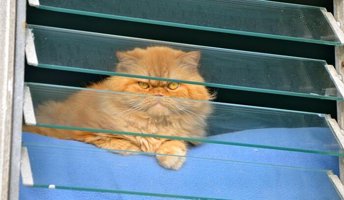 Foto gatti arrabbiati divertenti