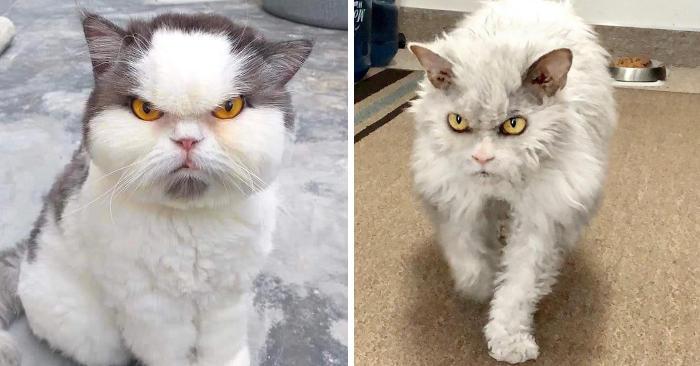 23 gatti dall'aria minacciosa con cui è meglio non scherzare