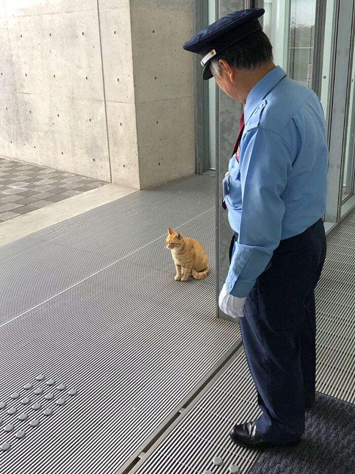 Gatti cercando di entrare in un museo Giappone