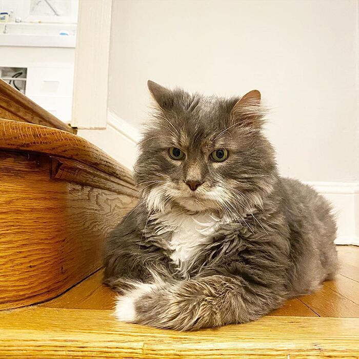 Gatto obeso cerca casa Wilford