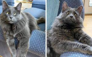 Questo è Belarus, il gatto con strabismo che ha catturato il cuore di tutti