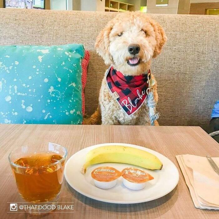 Hotel consente agli ospiti di prendersi cura di un cane abbandonato durante il soggiorno e di adottarlo