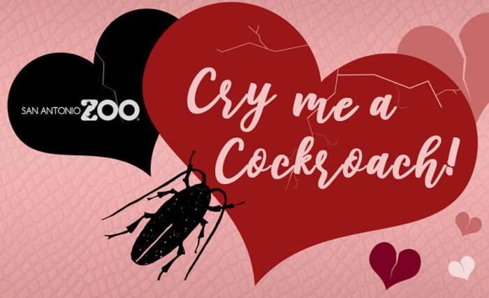 Chiama uno scarafaggio col nome del tuo ex e dallo in pasto ad un animale: l'idea per San Valentino