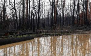 Tutti gli incendi in Australia sono ufficialmente domati grazie ad una settimana di pioggia