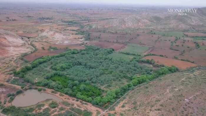 Marito e moglie comprano le terre vicino una riserva di tigri per proteggere la foresta e farla crescere