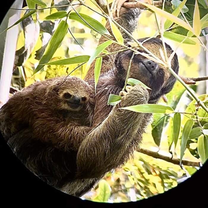 Una vacanza in compagnia dei bradipi nelle foreste del Costa Rica - Nayara Springs e Nayara Resort