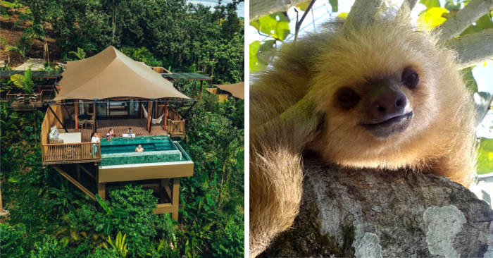 Una vacanza nelle foreste del Costa Rica in compagnia dei bradipi, maestri di relax