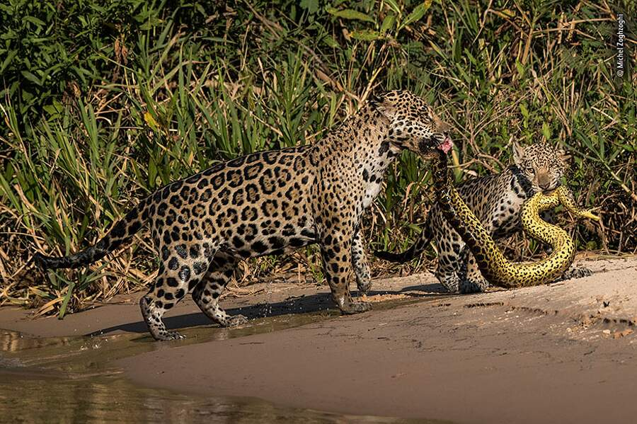 I vincitori del LUMIX People's Choice Award del Wildlife Photographer of the Year