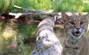 Fotografo crea video straordinari dei tanti animali selvatici che attraversano un tronco su un fiume