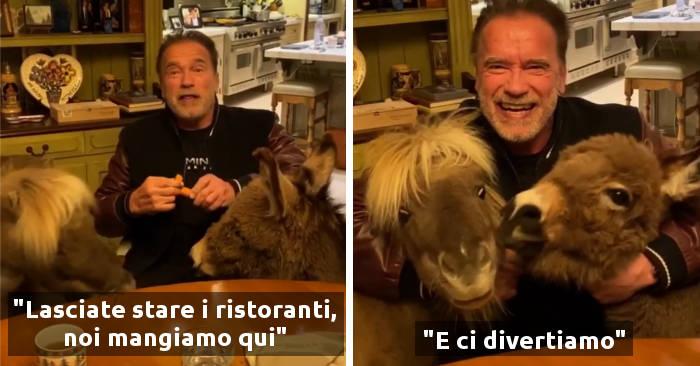 Arnold Schwarzenegger in auto-isolamento a casa con un cavallo nano e un mini asino parla di coronavirus