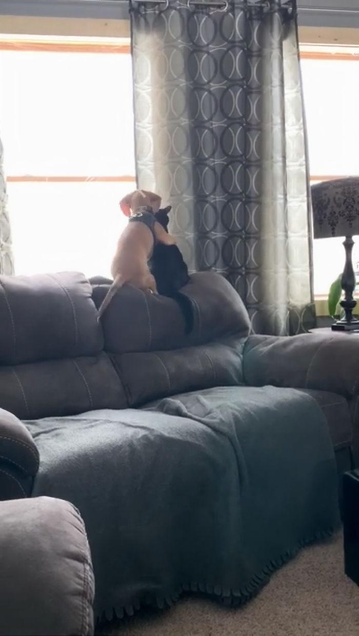 Cagnolino e gatto si coccolano sul divano guardando dalla finestra, e sono adorabili