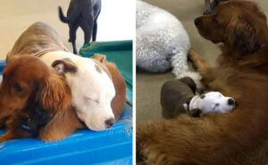 Edna va all'asilo per cani e fa amicizia con quelli più soffici per dormirci sopra
