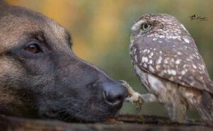 Civetta viene adottata da un pastore belga e diventano amici per la pelle
