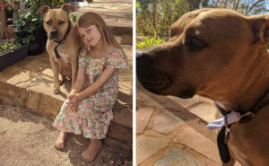 Nugget, il cane postino che aiuta i bambini in quarantena a scambiarsi lettere scritte a mano