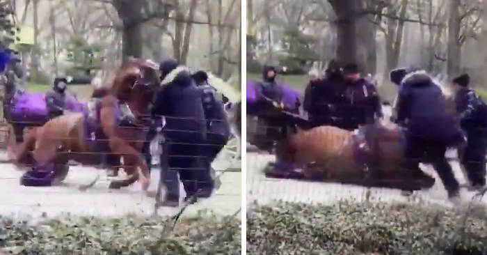 Proteste a Central Park: cavalla da carrozza infortunata viene soppressa