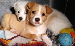 Bari, due cucciole abbandonate in un sacco della spazzatura, salvate da volontari e adottate da due famiglie