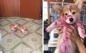 Cucciolo fa scorpacciata di frutti rossi e si addormenta, il proprietario ha quasi un infarto