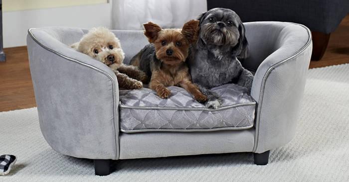 Questi divani e sofà per cani e gatti faranno sentire il vostro pelosetto veramente a casa