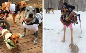 Donna adotta 6 cani disabili che nessuno voleva, e ora vivono felici nella natura