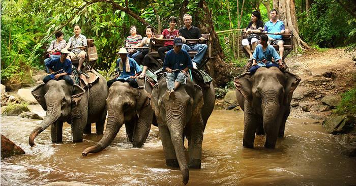 Coronavirus, 78 elefanti che trasportavano turisti in Thailandia sono stati liberati per sempre
