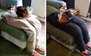 Marito e moglie ingannano la loro gatta super appiccicosa creando gambe finte su cui sedersi