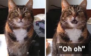 """Questa gatta dice """"oh oh!"""" ogni volta che è senza cibo"""