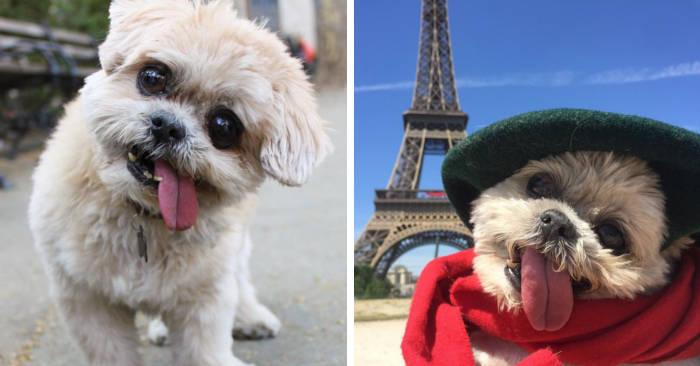 Addio Marnie, uno dei cani più famosi di Instagram per la sua lingua a penzoloni