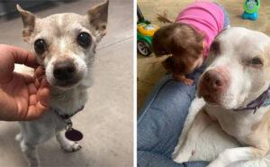 Persone in quarantena cercano compagnia? Una no-profit aiuta con le spese per tenere un cane senior