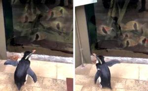 Coronavirus, l'acquario chiude e i pinguini sostituiscono gli umani visitando gli altri animali