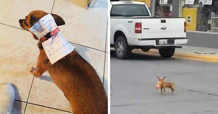 Ragazzo in quarantena manda il cane a comprare le patatine, e compie la missione