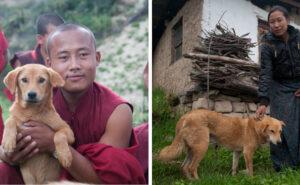 Il re del Bhutan chiede agli abitanti di adottare un cane o piantare un albero per il suo compleanno