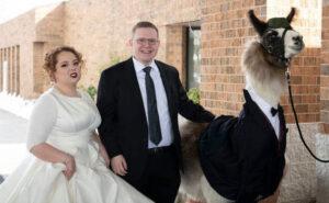Si presenta con un lama in smoking al matrimonio della sorella (che non sembra divertita)