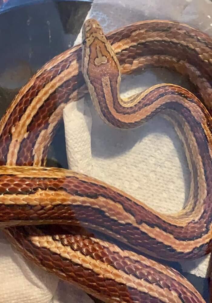 Non è un serpente e non è un pene. Che sarà mai?