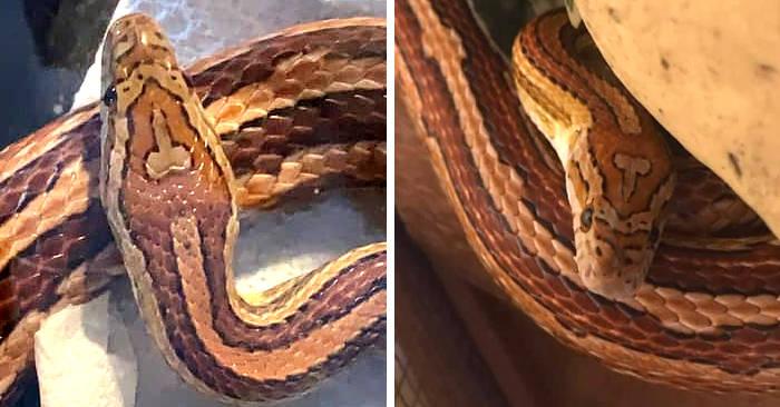 serpente a forma di pene)