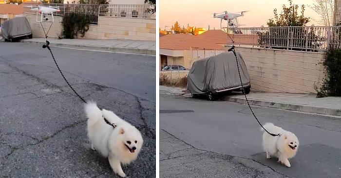 Usa il drone per portare fuori il cane stando a casa e favorisce il distanziamento sociale